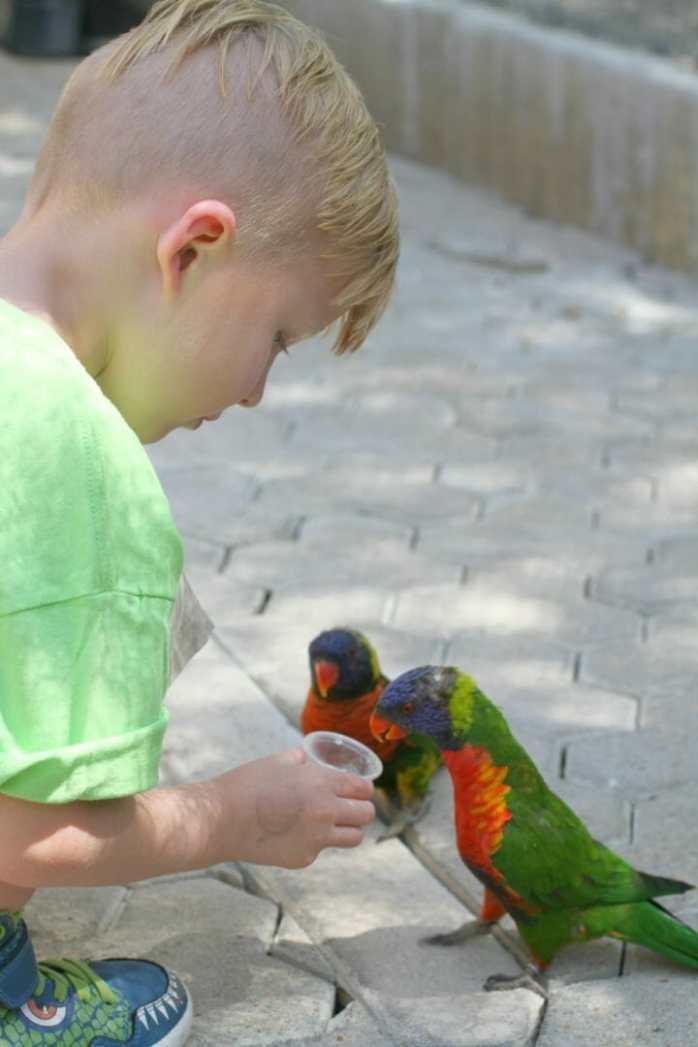 feeding parrots san antonio zoo