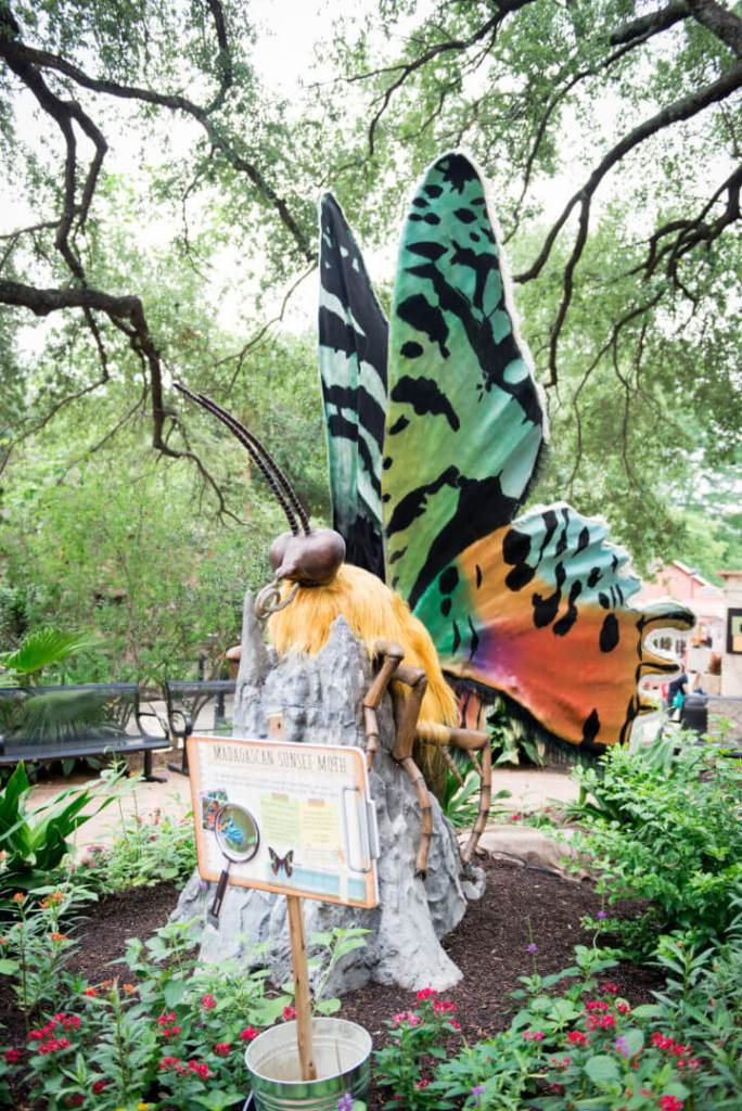 san antonio zoo giant butterfly