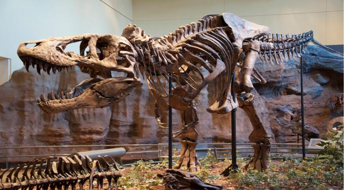 New evidence shows dinosaurs were slowly becoming extinct
