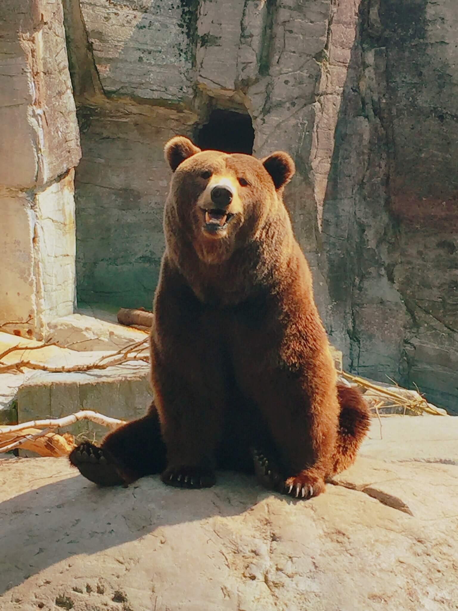 Retrouver son coeur d'enfant au Zoo de Copenhague