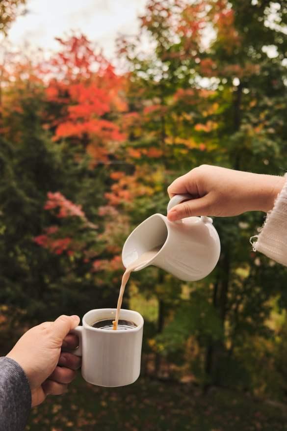 cafe-condo-arbre