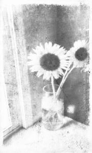 sunflower-bw-2-1