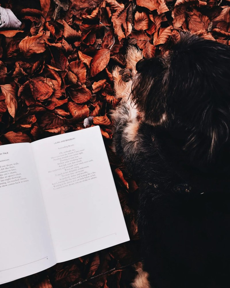 image of dog next to poetry book for blog on deep meaningful poems - Laura Jane Bradbury