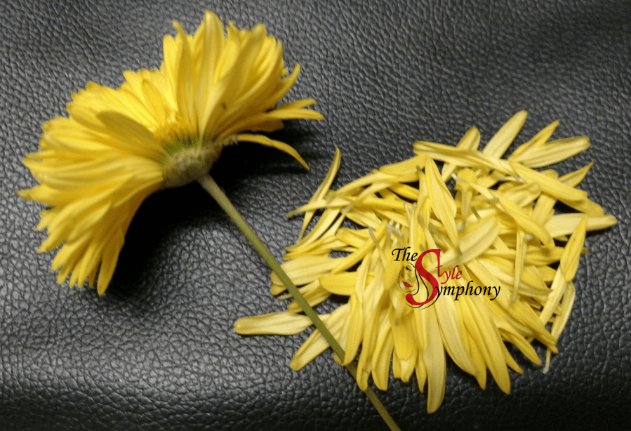 Chrysanthemum flower ghazal