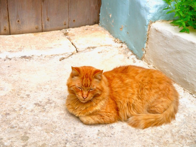 cats-feline-travel-malta