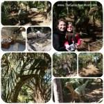 Bervard Zoo Dinosaurs Dead or Alive Exhibit