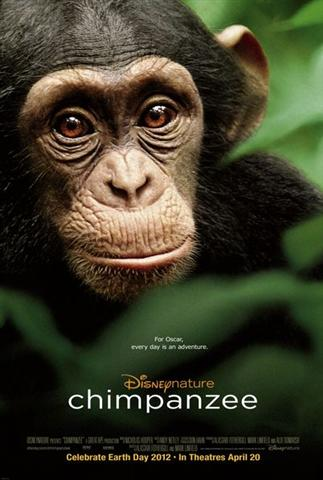 Disneynature's Chimpanzee