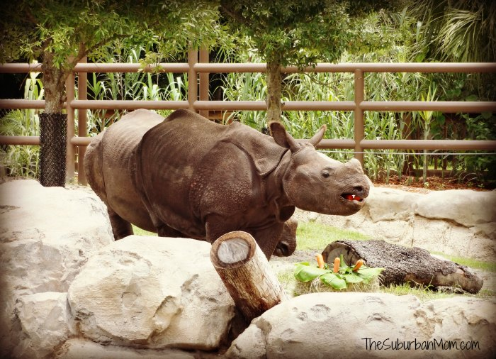 Rhinoceros Birthday Cake Central Florida Zoo