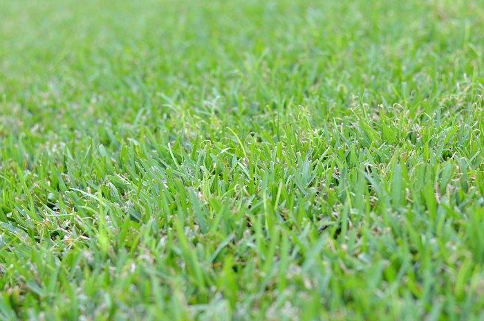 Green Florida Grass