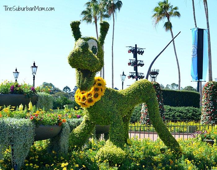 Flower and Garden Festival 2016 Pluto