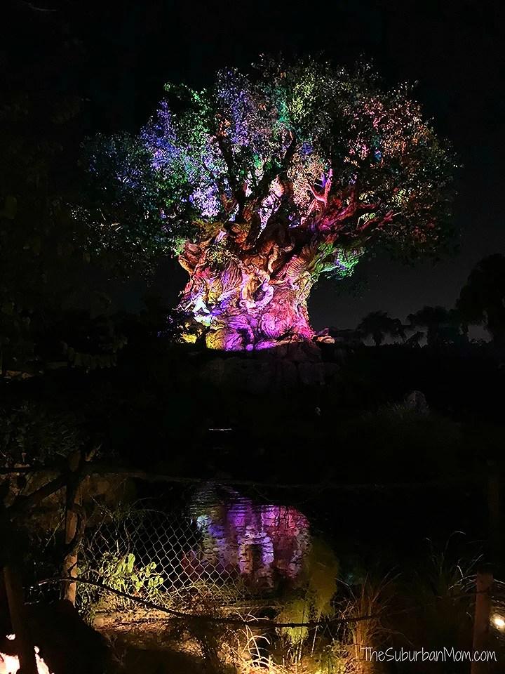 Disney Tree of Life At Night