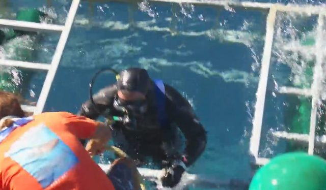Moments later a diver climbs out of the cage