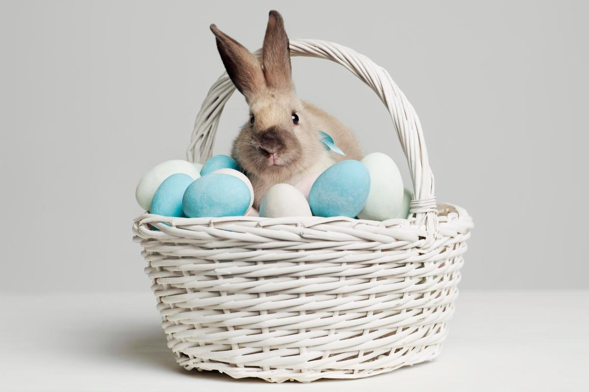 Why Do We Celebrate Easter And Why Do We Eat Chocolate Easter Eggs