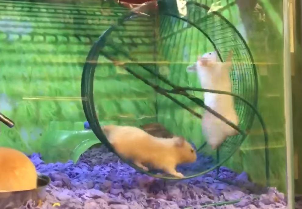 Amazon Com Habitrail Ovo Transport Unit For Hamster Cage Small