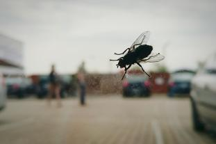 Image result for insect car windows