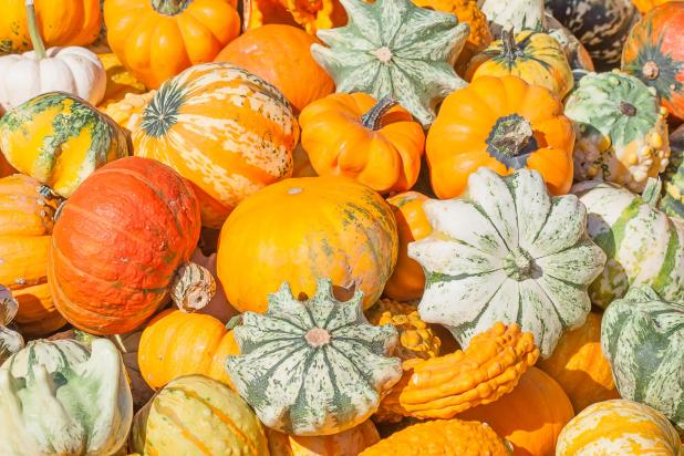 The occasion is very similar to Britain's Harvest Day - but on a much larger scale