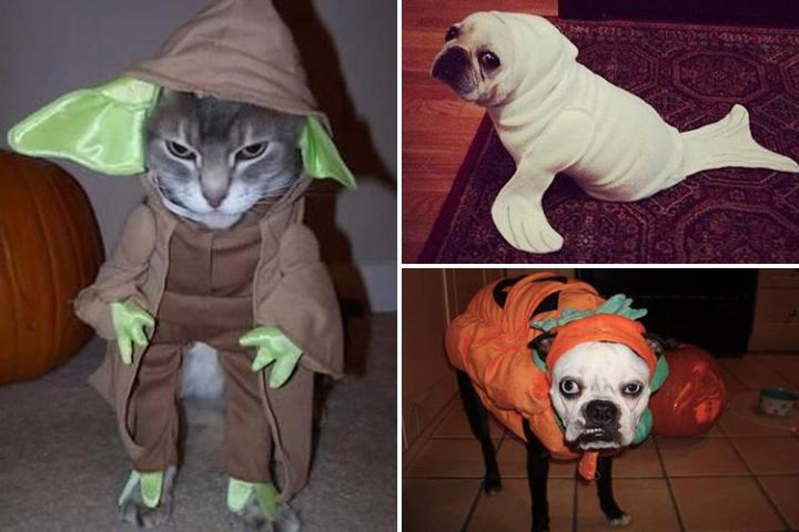 These pets all absolutely hate dressing up for Halloween    and     These pets all absolutely hate dressing up for Halloween    and their  miserable faces will leave you howling