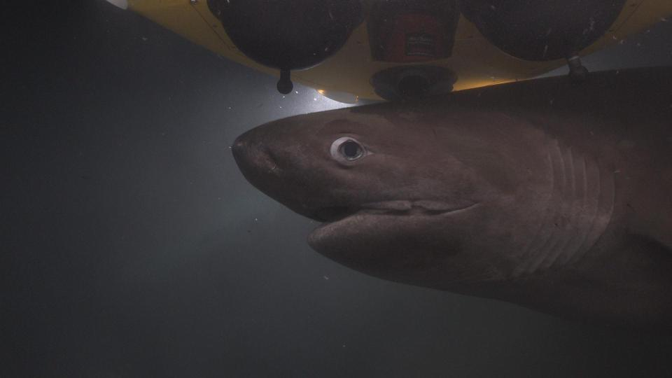 The producers believe the sharks became aggressive and mistook them as a competitor for the carcass