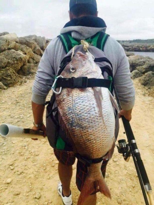 La pesca de un pescador era demasiado grande para llevar, así que se la ató a la mochila