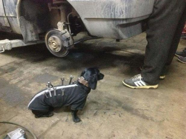 ¡Paw-fect ayudante!  Un mecánico con cuerdas en su perro para llevar sus llaves y herramientas