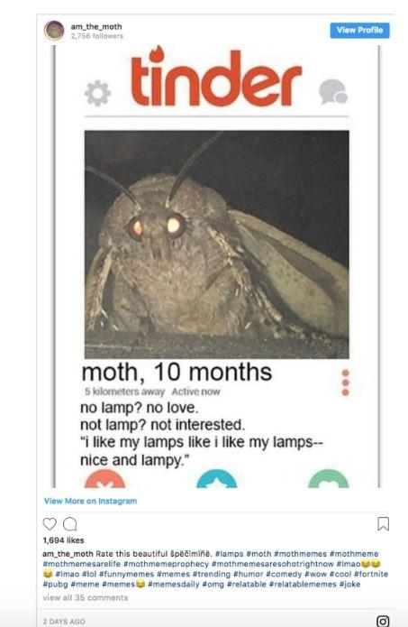 Hundreds Of Moth Memes Have Flooded The Internet Sparked By One