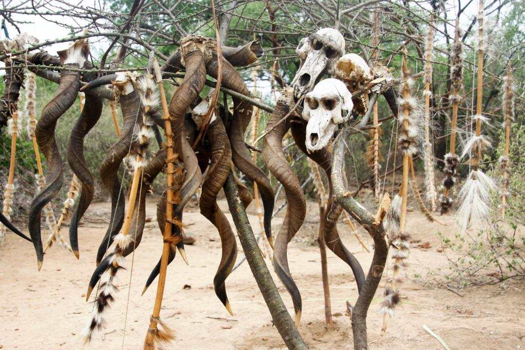 Skulls of baboons and antelope hanging on tree near huts where the tribe live