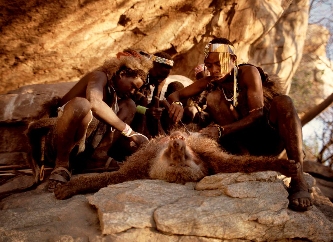 Baboon is the meat of choice for the Hadza hunters of Tanzania who have lived in the region for 10,000 years