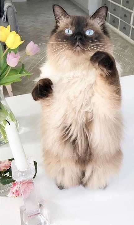 Holly showed off her white tabletops with this adorable photo of her cat