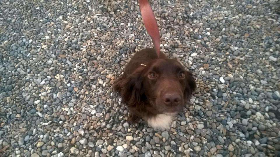 Police found the stolen dog at the traveller site