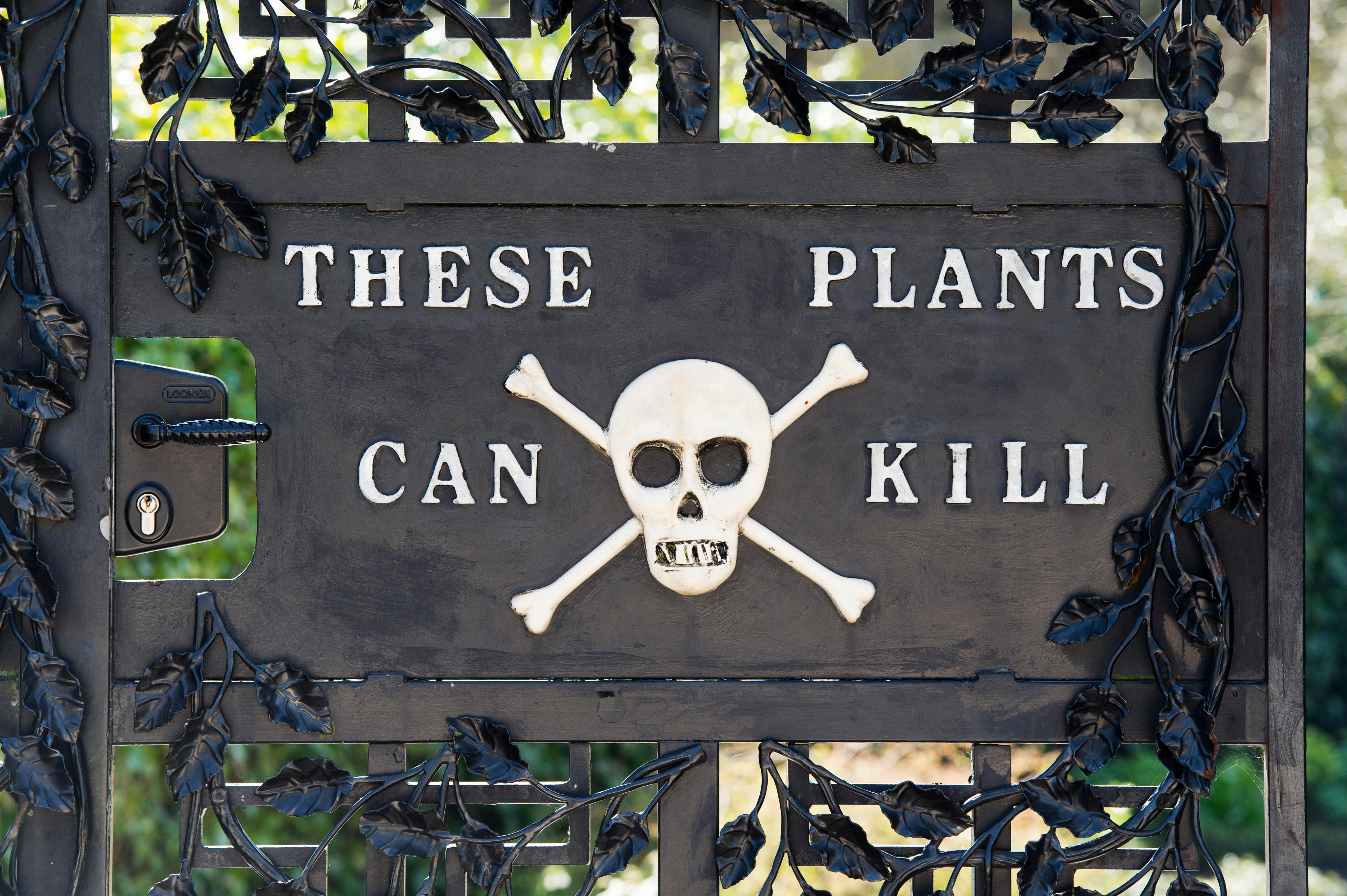 Image result for the alnwick garden