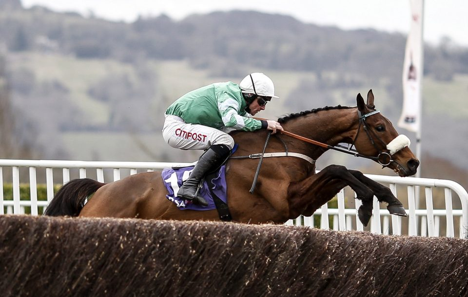 Presenting Percy must have a big chance in the Gold Cup