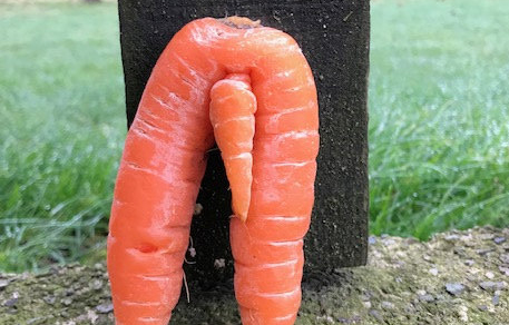 A Morrisons shopper found a carrot that looked exactly like a penis and legs