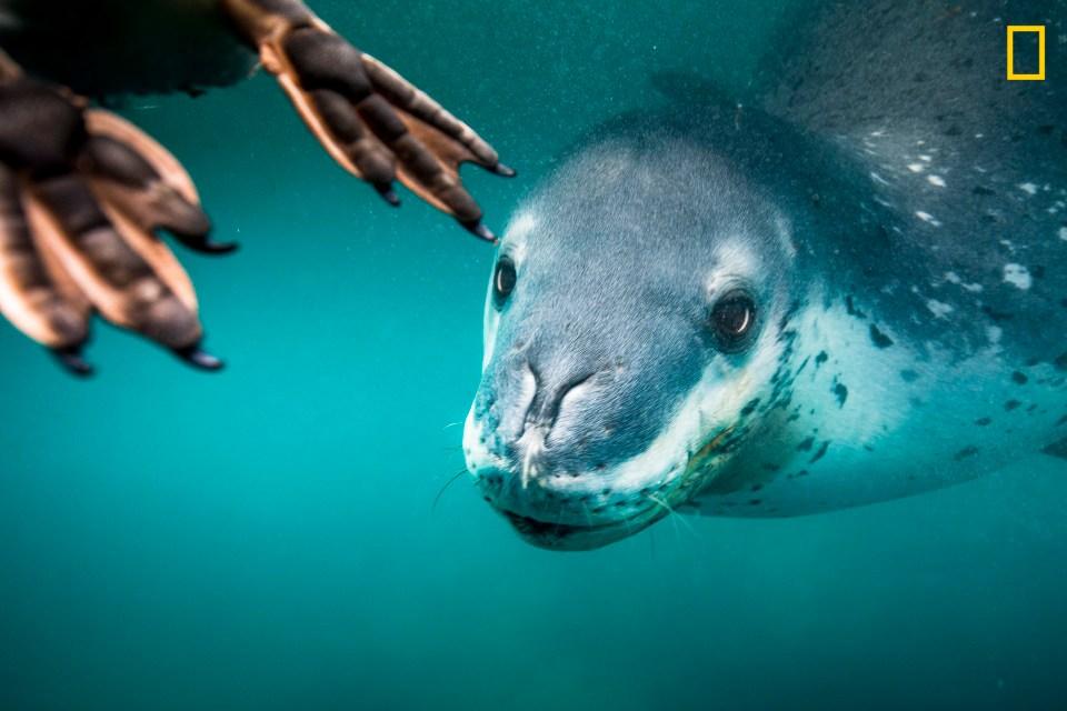 Image result for california sea lion