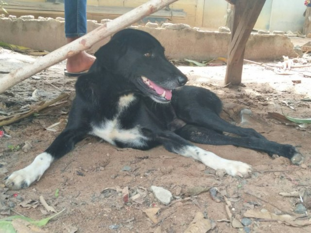 Ping Pong carried out the heroic rescue despite only having use of three of his legs