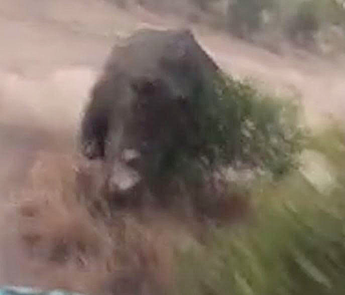 The rhino was close behind the speeding jeep