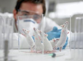 70% of mice in the tests came out cancer-free
