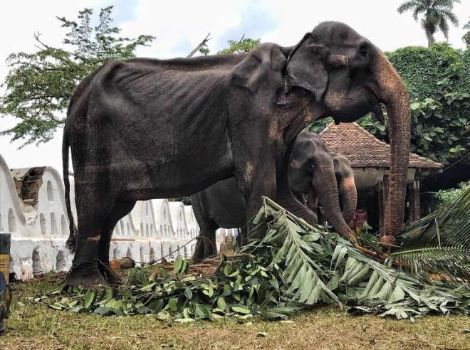 Tikiri the elephant has died just weeks after photos of her skeletal body shocked the world