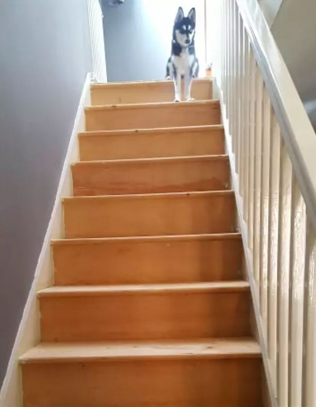 Woman Shows Off Stunning Diy Stairs Transformation That Cost Her   Cost To Carpet Stairs   Stair Railing   Handrail   Carpet Runners   Carpet Flooring   Anderson Tuftex