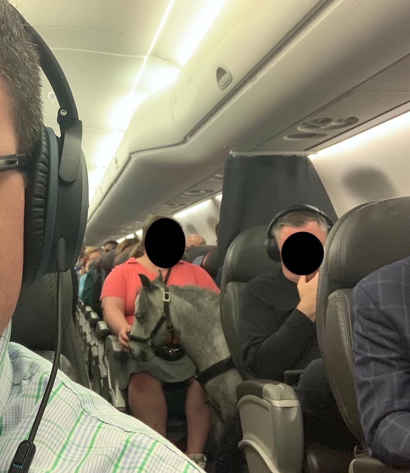 A passenger was spotted with a miniature horse on a flight