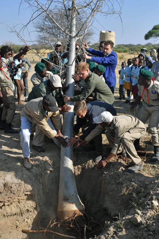 Prince Harry grins as he helps plant a huge tree