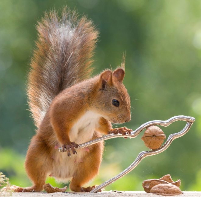 This squirrel has proved he isn't just a pretty face - he can also come up with cracking ideas