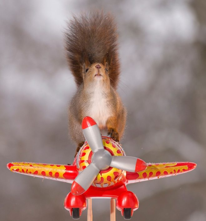 This adventurous squirrel has got a head for heights as well as a bushy tail as he takes off on his toy plane