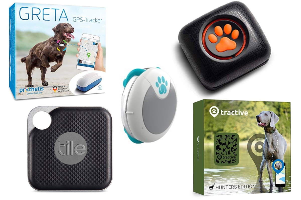 5 best dog trackers 2020 gps trackers