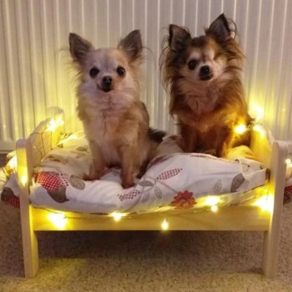 The two pooches look pretty pleased with themselves