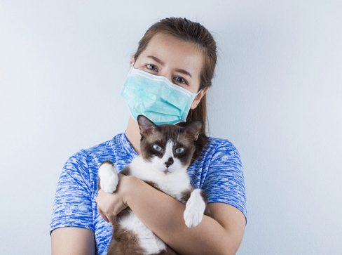 Allergies to cats affect one in ten people (stock image)