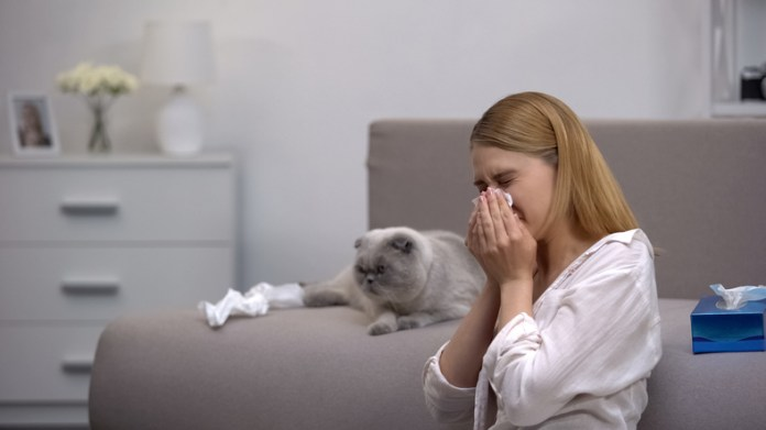 Allergies to cats can cause sneezing, itchy eye cough (stock image)