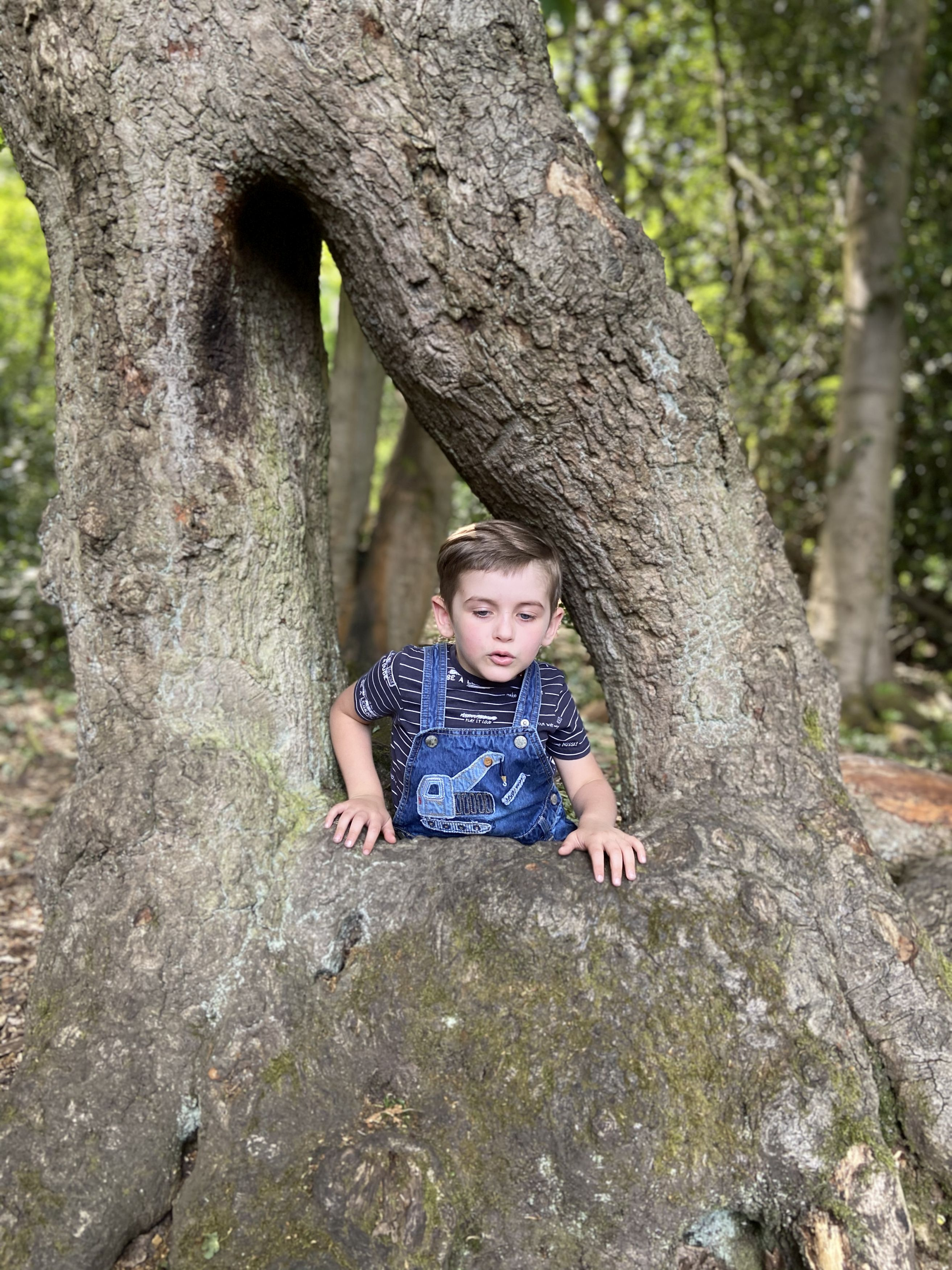 A passerby was able to yank the four-year old out of the tee at Eastham Country Park