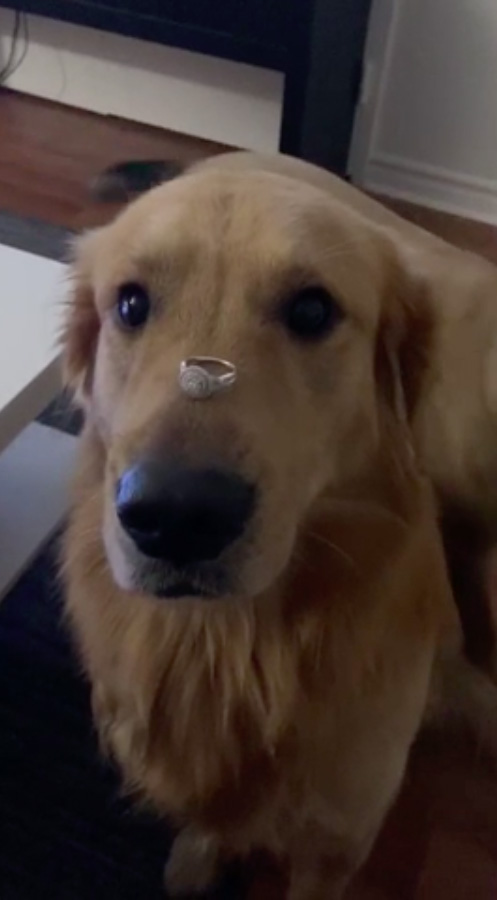 A woman has caused hysterics with a video where she gets her dog to pose with her engagement ring on his nose