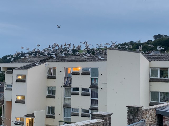 Picture of the seagulls on the flats opposite the Casts' home