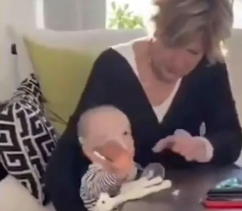 In the video the baby reaches for a champagne flute and manages to knock it over
